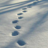 Thumbnail image for Footprints
