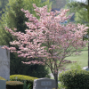 Thumbnail image for Spring In The Cemetery